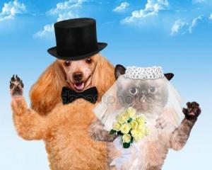 depositphotos_47959249-stock-photo-cat-and-dog-wedding
